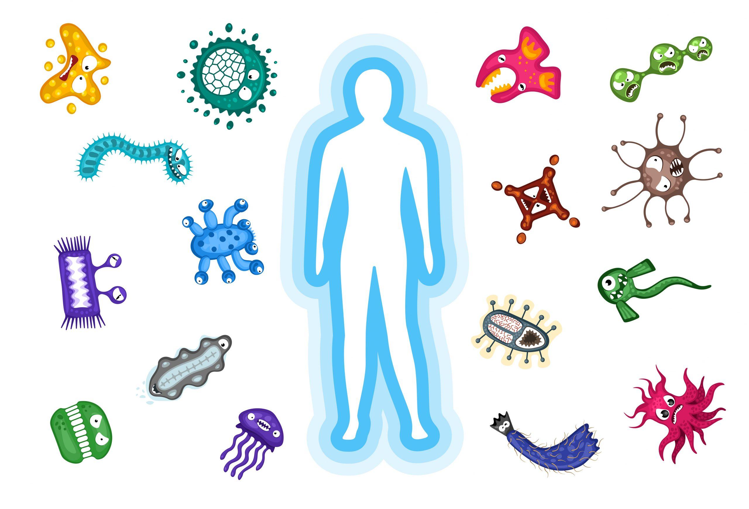 腸が全身の免疫システムを司る